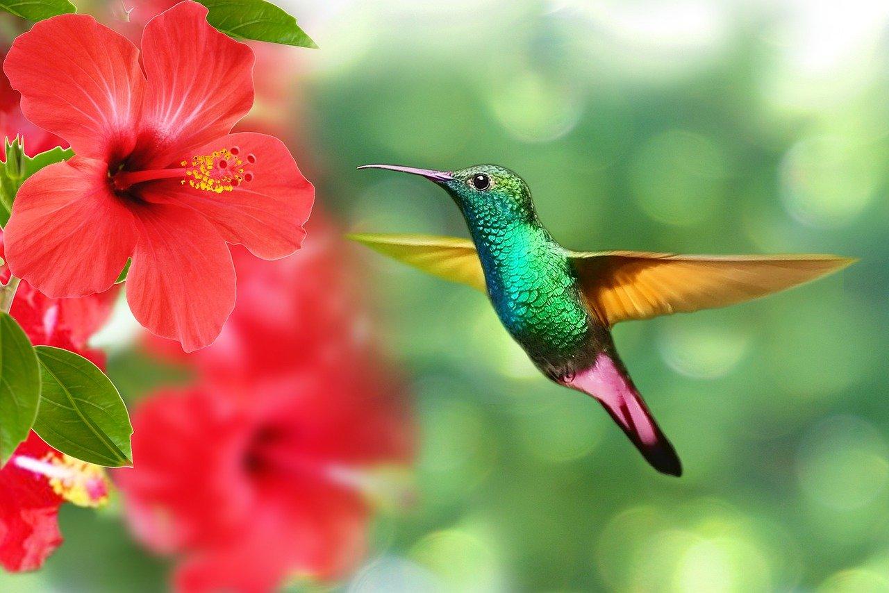 colibri ethics cadeau reves momes